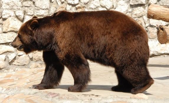 Московский зоопарк: график работы, животные