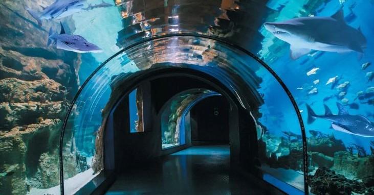 Москвариум — самый большой океанариум на ВДНХ в Москве
