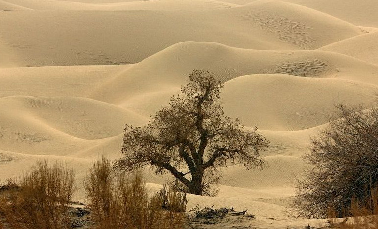Такла Макан: пустыня смерти в Китае
